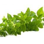 Conosci le erbe aromatiche? – Sette curiosità sull'Origano