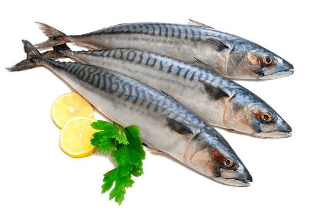 Sgombri, sardine e acciughe fanno parte del gruppo del pesce azzurro