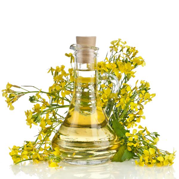 L'olio di colza è considerato pericoloso per la salute a casua del suo elevato tenore in acido erucico