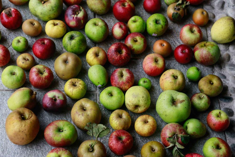 Biodiversità delle mele