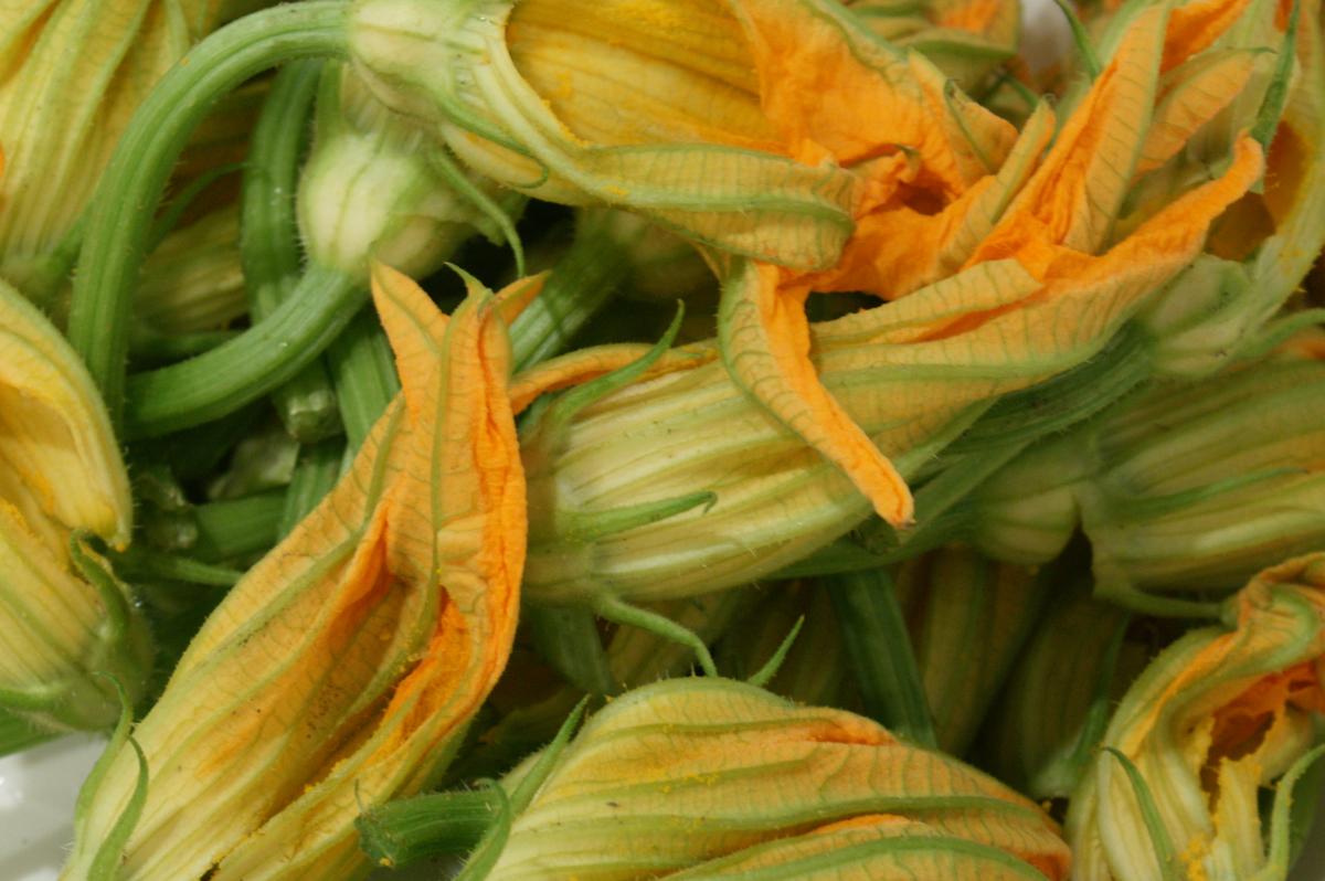 I segreti della zucchina edo blog for La zucchina