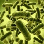 Prebiotici e probiotici…cosa sono?