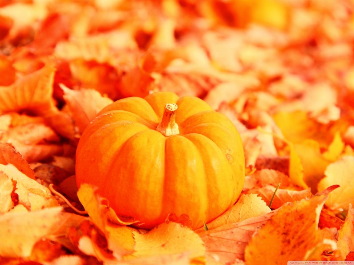 La zucca è il simbolo vero e proprio dell'autunno
