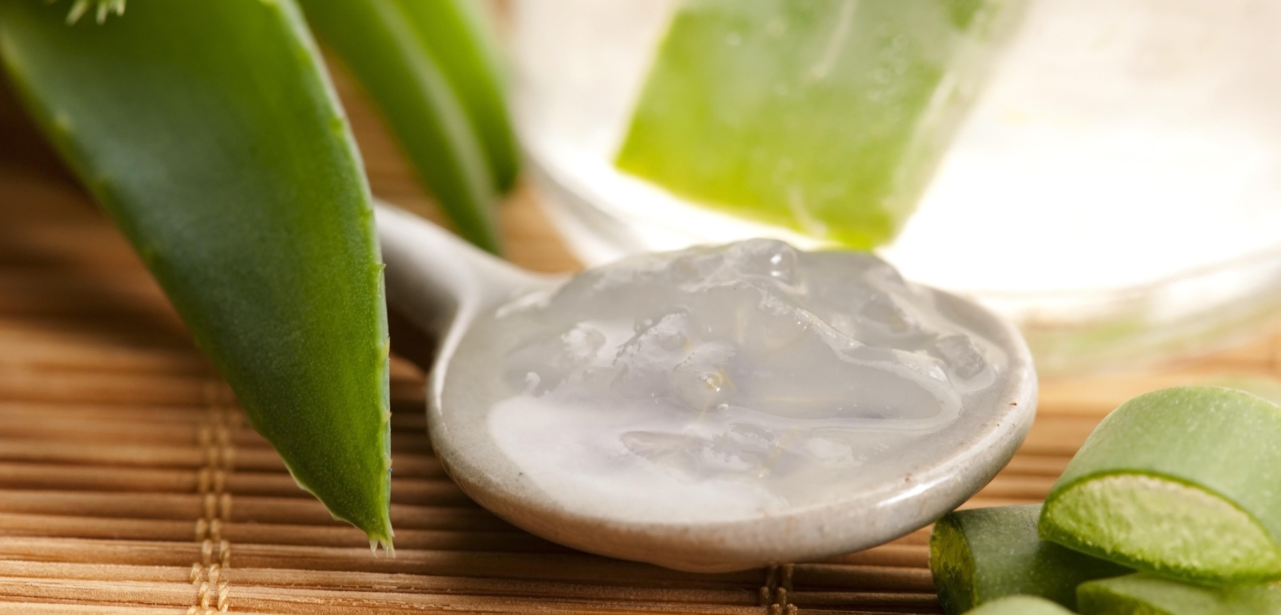 Dalle foglie dell'aloe si ricava un succo o un gel