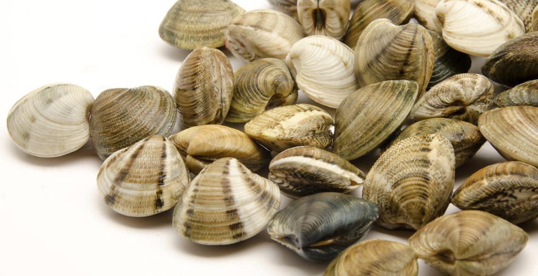 Molluschi marini