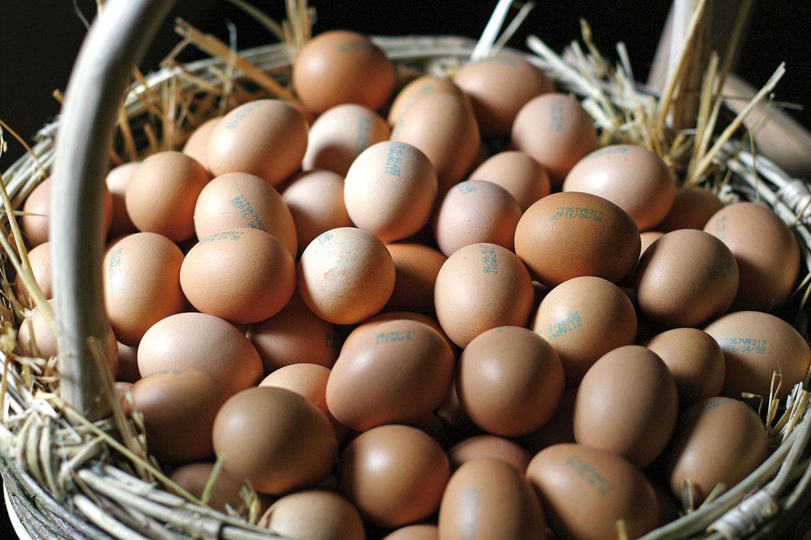 In principio era … l'uovo