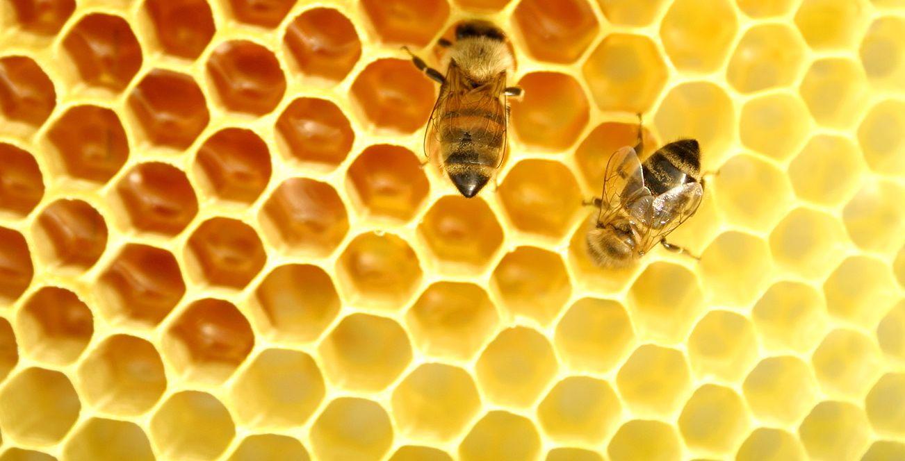 Non solo miele: i prodotti dell'alveare