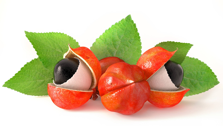 Frutto e seme del guaranà
