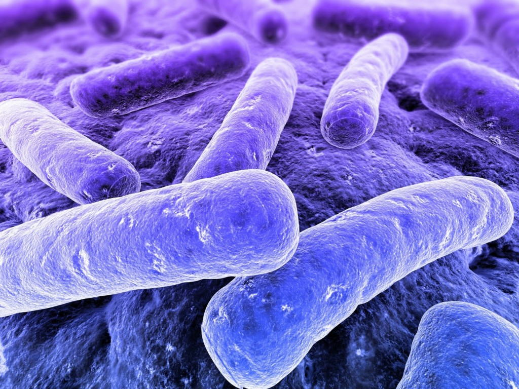 Da simbiosi a disbiosi: il microbiota intestinale tra salute e malattia