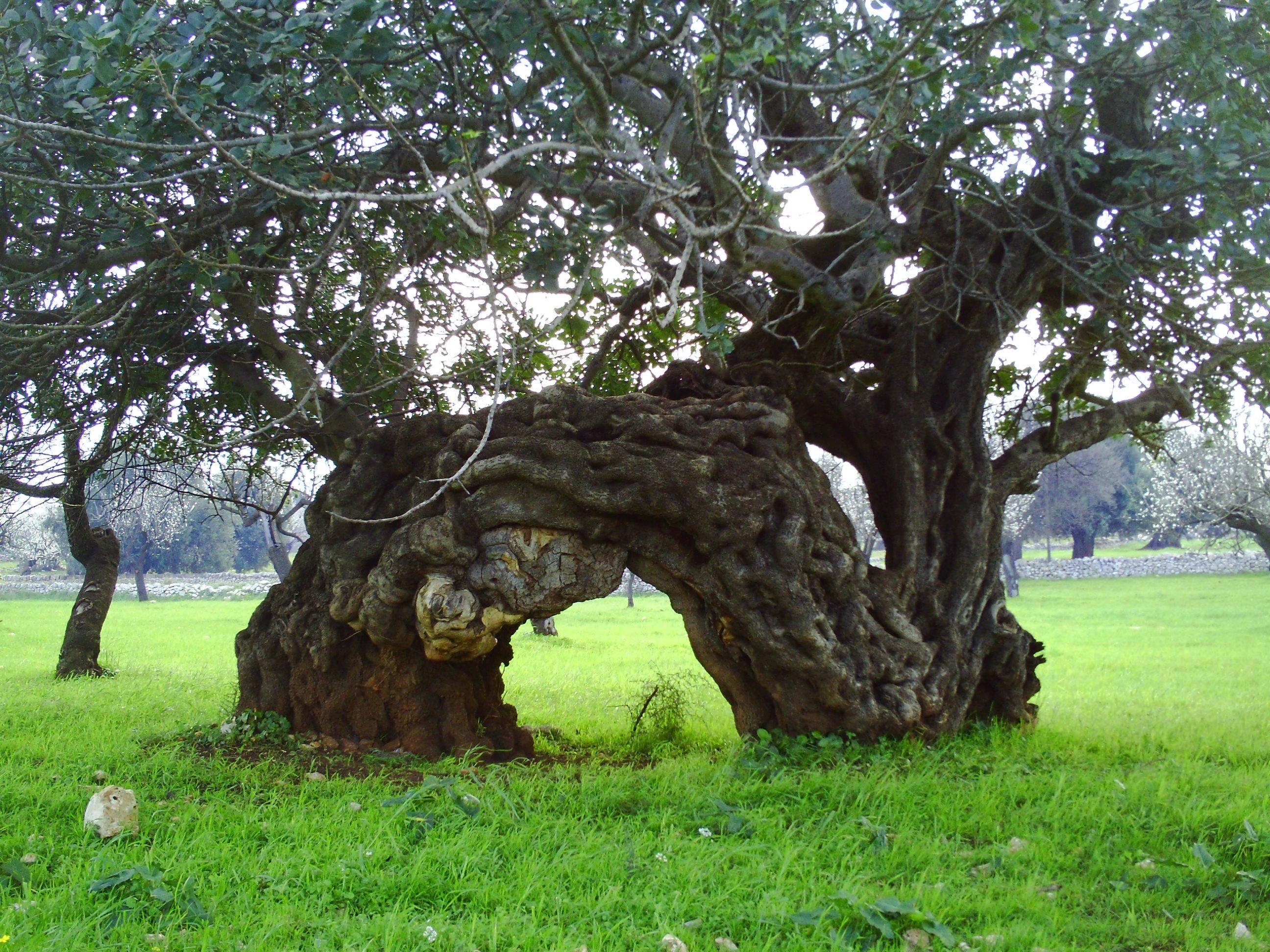 Carrube i frutti dimenticati edo blog for Alberi da frutto prezzi
