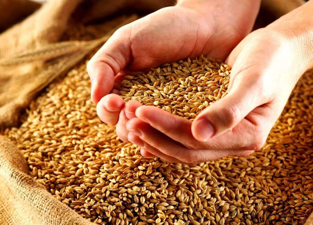 Alimenti integrali e biologici