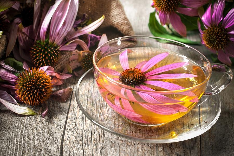 L'infuso di Echinacea, dalle combattive proprietà antivirali, è uno dei rimedi più antichi contro i mali di stagione.