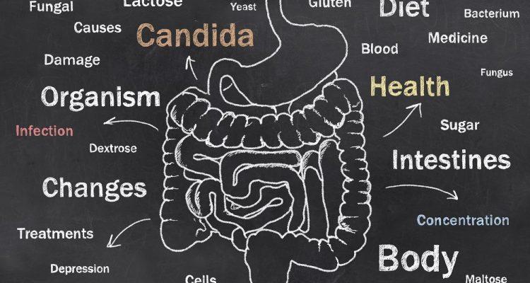 L'angolo delle curiosità: cambiare dieta…e microbiota!